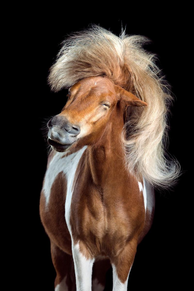 "An image from ""Horsestyle"" series by Wiebke Haas."