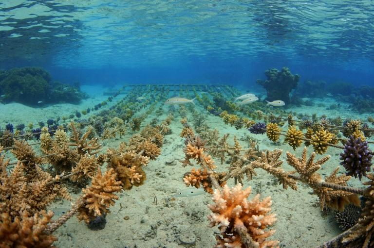 Fish swim through the coral on Fiji's Coral Coast, which faces the threat of climate change
