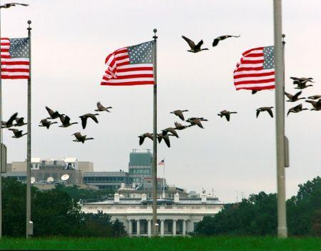 File photo of Canada Geese fly by the U.S. flags at the base of the Washington Monument, in Washington