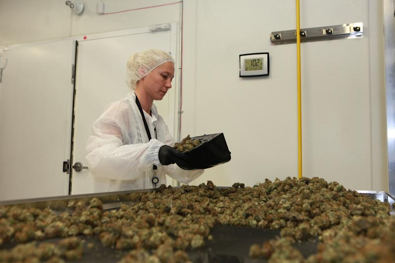 Production at the Aurora Mountain Facility in Cremona, Alta. (Aurora Cannabis)
