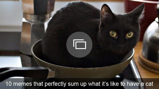 10 memes that perfectly sum up what it's like to have a cat