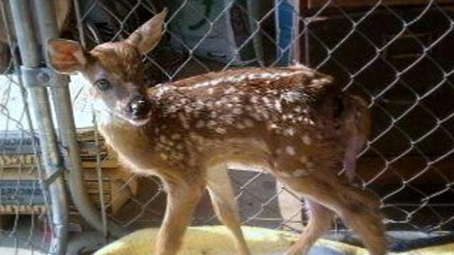 Ind. Officer, Wife Could Face Jail for Saving Deer