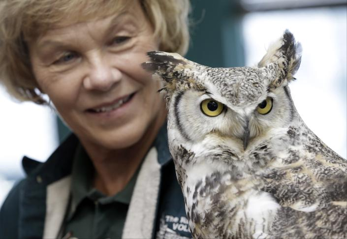 Volunteer Claire Palmer holds a great horned owl, Wednesday, March 13, 2013, at the Raptor Center on the St. Paul campus of the University of Minnesota. The center listed about 30 owls as patients this week. It has been a tough winter for owls in some parts of North America. Some have headed south in search of food instead of staying in their northern territories. (AP Photo/Jim Mone)