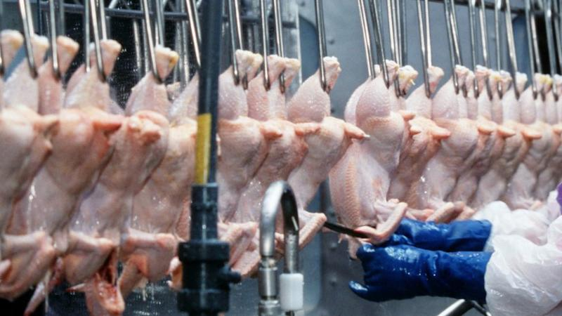 Chicken being processed in Arkansas, US