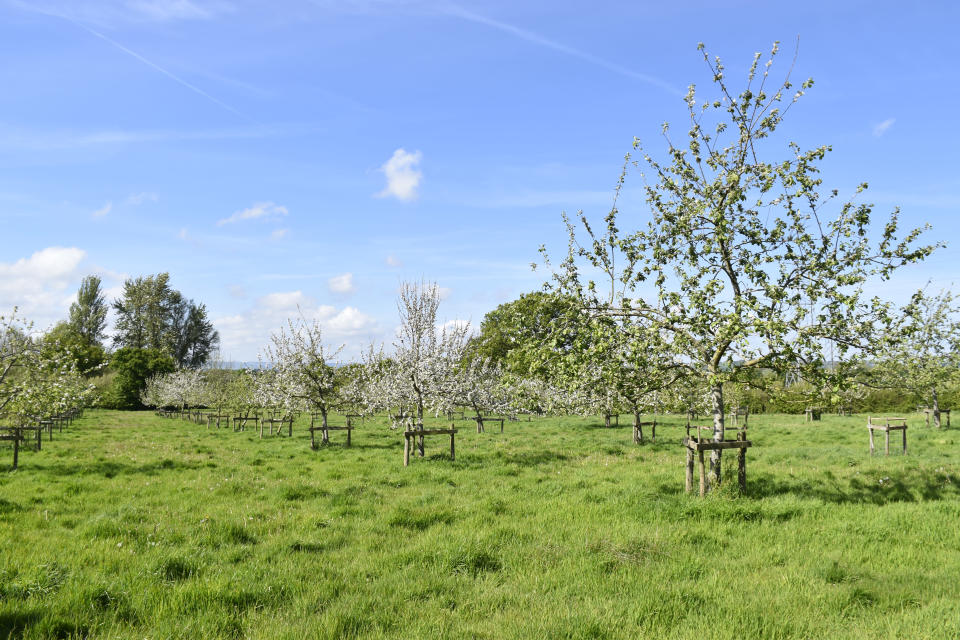 Around 300 new blossoming fruit and nut trees will be planted at Killerton to provide harvest produce and a food source for pollinators (Emma Jones/National Trust/PA).