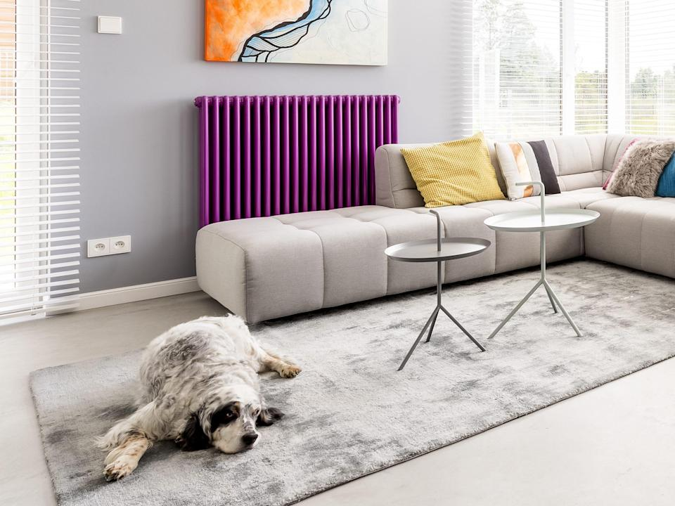 Furry dog lying on the carpet in colorful spacious living room with violet heater
