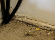 """Mice droppings are seen near a hole in the corner of the living room in Carrie Newson's residence at the Dutch Village apartments, Tuesday, July 30, 2019, in Baltimore. Newson has complained to management about mice and mold in her home but the issues have yet to be fixed. The apartment complex is owned by Jared Kushner, son-in-law of President Donald Trump, who days earlier vilified Congressman Elijah Cummings' majority-black Baltimore district as a """"disgusting, rat and rodent infested mess"""" where """"no human being would want to live."""" (AP Photo/Julio Cortez)"""