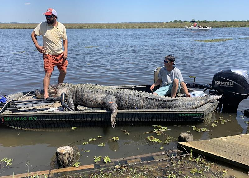 Derrick Saucier, left, and Jarrod Davis managed to catch a 13-foot, 6-inch alligator that had eluded hunters for years.