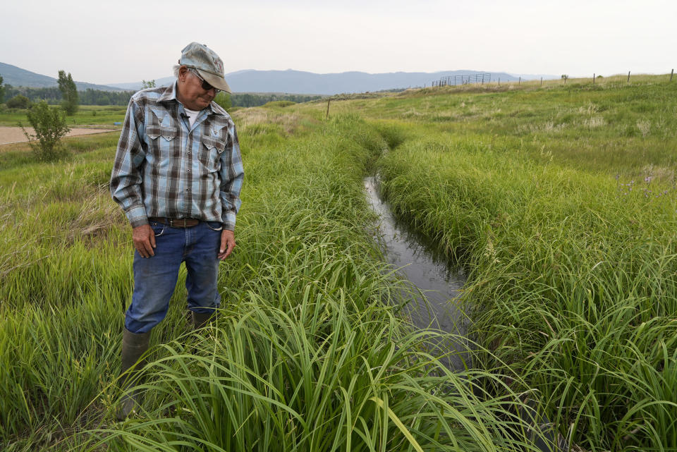 Rancher Jim Stanko checks the water level of an irrigation ditch, Tuesday, July 13, 2021, on his ranch near Steamboat Springs, Colo. Stanko said that due to drought conditions this year, if he can't harvest enough hay to feed his cattle, he may need to sell off some of his herd. (AP Photo/Brittany Peterson)