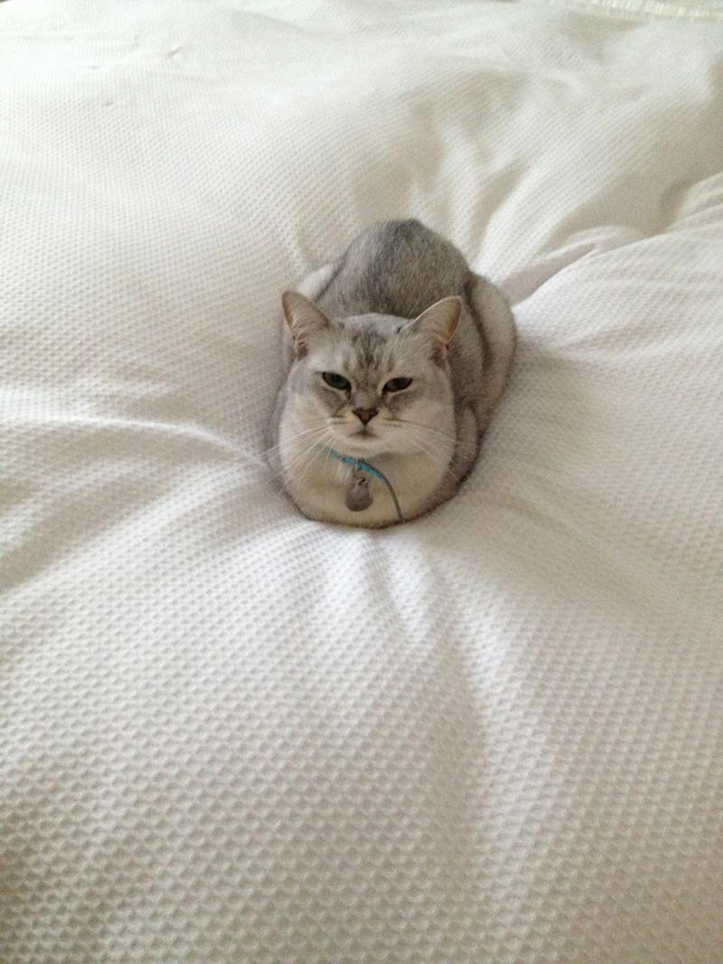 A photo of Clare's cat sitting on a bed
