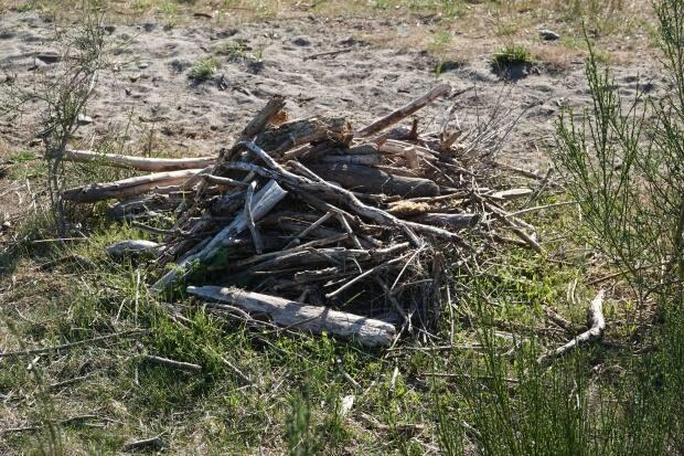 Ann Nightingale said she's noticed purposeful piling of driftwood on her local beach, which may seem helpful, but is harming the ecosystem.