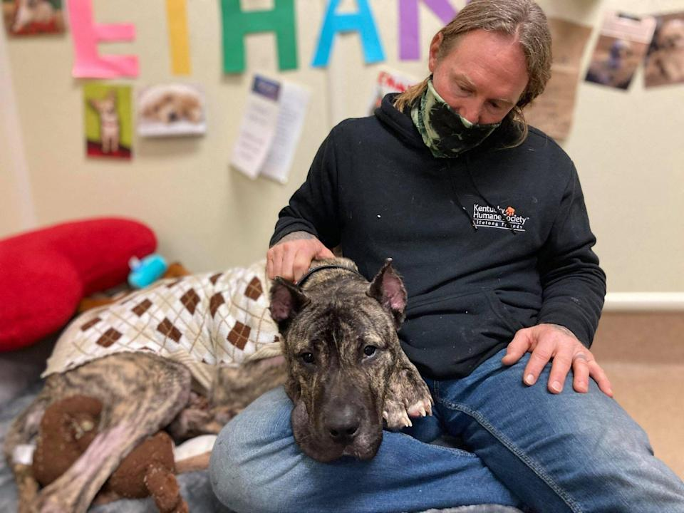 Ethan the dog moves into home with other pups