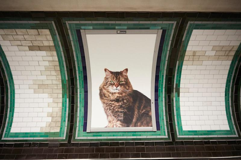 A Kickstarter project filled a London subway station with photos of cats