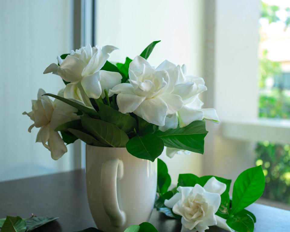Hardest houseplants to keep alive gardenia