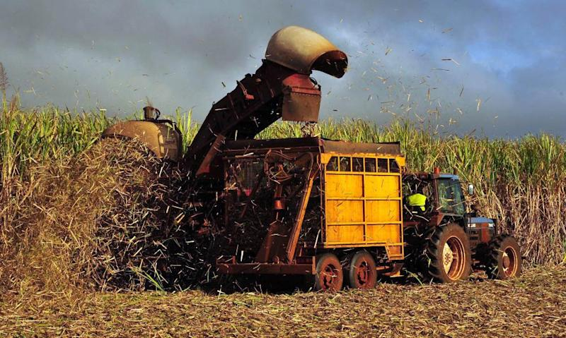 Sugar cane is harvested on a farm in Bundaberg, Queensland