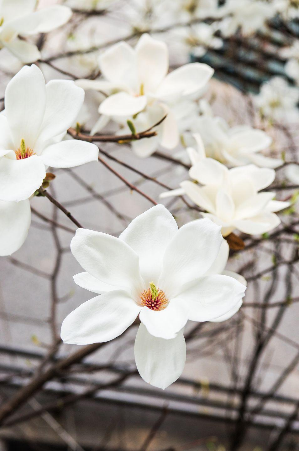 <p>These stunning blooms often festoon the trees as spring arrives, getting everyone who sees them excited for the season to come. That's why it's only logical that they signify a love of nature. </p>