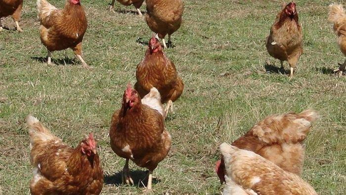 ACCC rejects free range definition