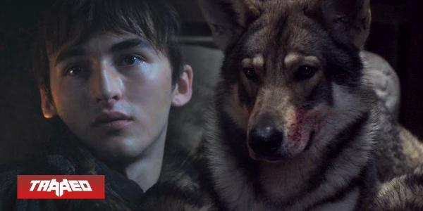 Fallece de cáncer Odín, el perro que interpretó a Summer en Game of Thrones