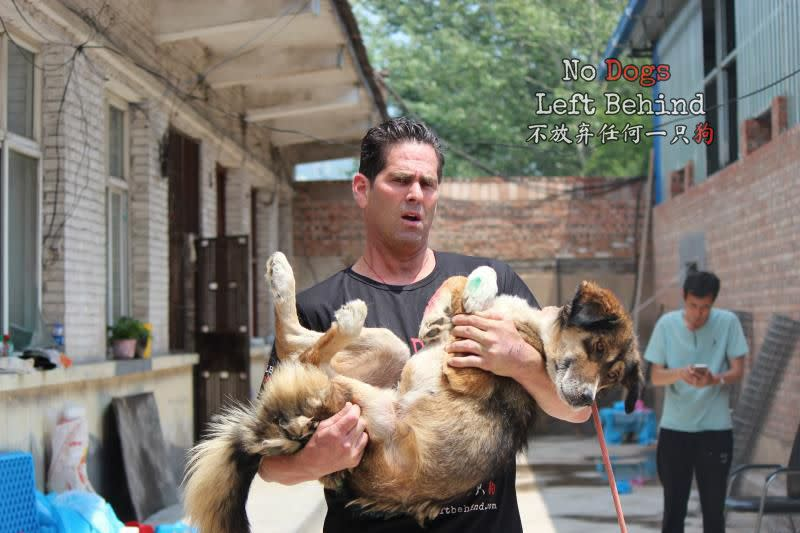 Jeffrey Beri, founder and president of No Dogs Left Behind, holds a rescued slaughterhouse survivor