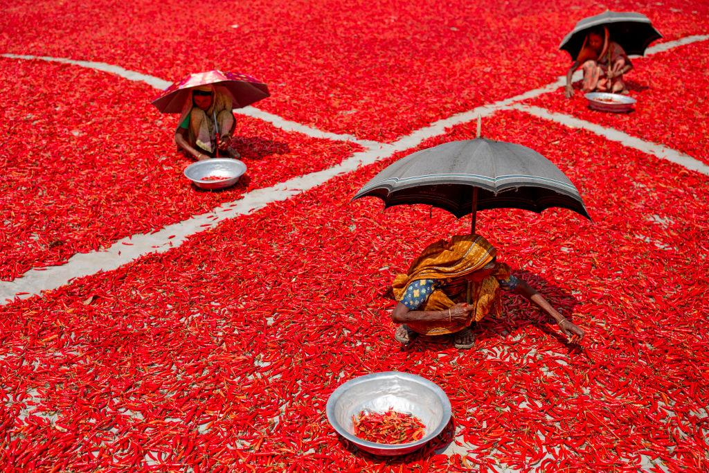 <p>Women process and dry red chili pepper under sun near Jamuna river Bogra Bangladesh March 18, 2019. Every day they earn less than USD $1 (Taka. 70) after working 10 hours a day. The char areas have some of the highest levels of poverty in the country. Red chili is the main source of income in the area and mostly women are engaged in its production and processing along with their regular unpaid care work. Women in this area have limited or no access to markets or finance; they have less bargaining power and limited income. (Photo from Kazi Salahuddin Razu/NurPhoto via Getty Images) </p>