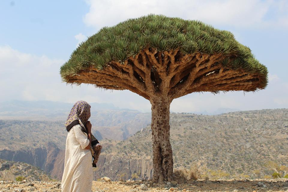 Distant dream: the Yemeni island of Socotra