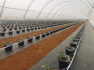 Blueberries irrigation project