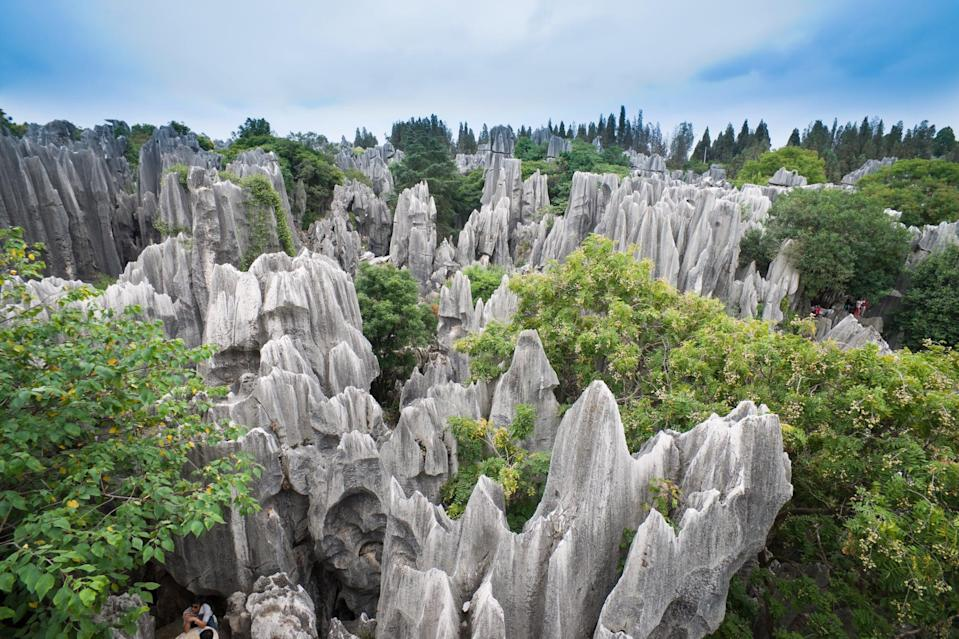 <p>The tall rocks give the illusion of petrified trees, which is where the name shilin - or stone forest - comes from. </p>
