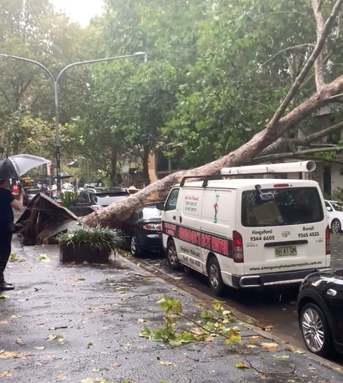 A car crushed by a fallen tree in Sydney's city centre. Source: Reddit