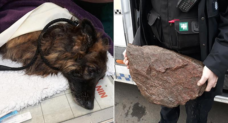 The Belgian Shepherd, registered as Bella according to its microchip, was seen on Monday morning attached to a carrier bag containing a large rock in the River Trent. (PA)