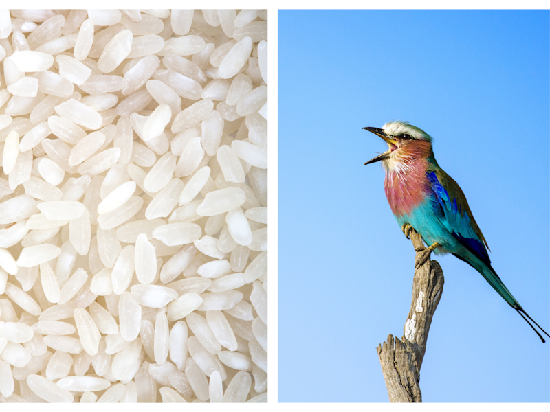 Can Uncooked Rice Actually Make Birds