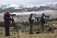 Tourists observe wolves from the Junction Butte pack in Yellowstone National Park, Wyo., Wednesday, Oct. 21, 2020. Wolves have repopulated the mountains and forests of the American West with remarkable speed since their reintroduction 25 years ago, expanding to more than 300 packs in six states. (AP Photo/Matthew Brown)