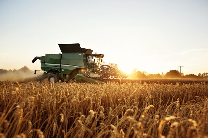 Combine harvester in front of the setting sun. Wheat field.