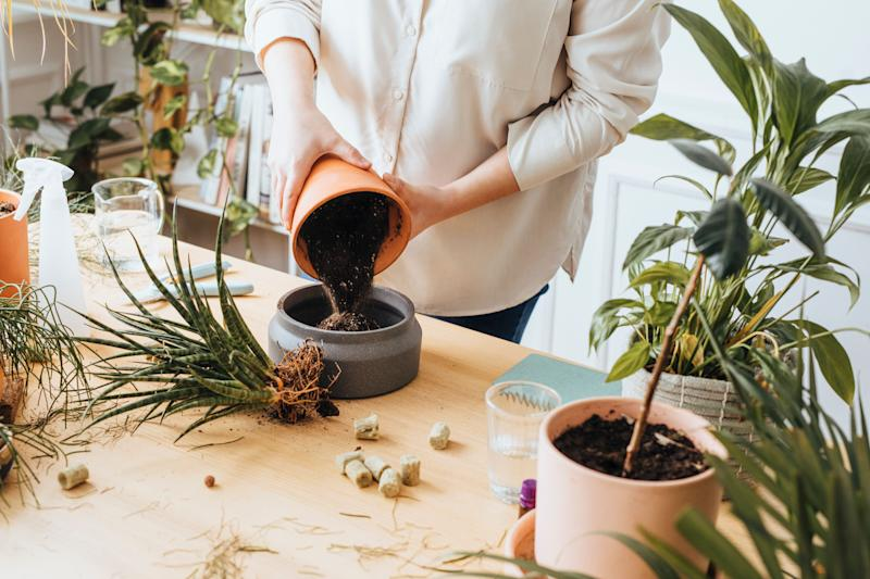 Plants absorb a lot of nutrients as they grow, so they need fresh soil from time to time. (Photo: FreshSplash via Getty Images)