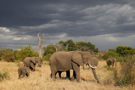 FILE PHOTO: A herd of elephants is seen at the Singita Grumeti Game Reserve