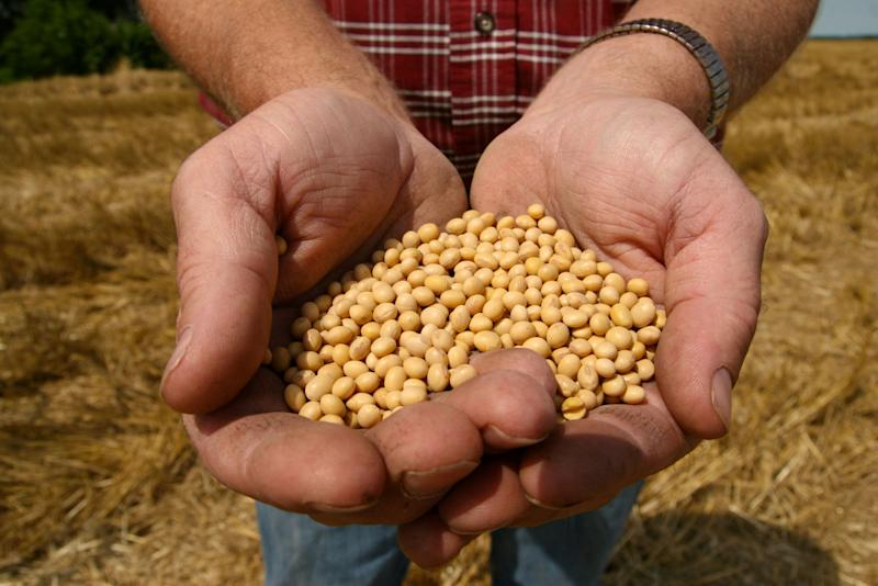 FILE - This July 5, 2008 file photo shows a farmer holding Monsanto's Roundup Ready Soy Bean seeds at his family farm in Bunceton, Mo.   A high stakes dispute over soybeans comes before the Supreme Court, with arguments taking place Tuesday.  (AP Photo/Dan Gill, File)
