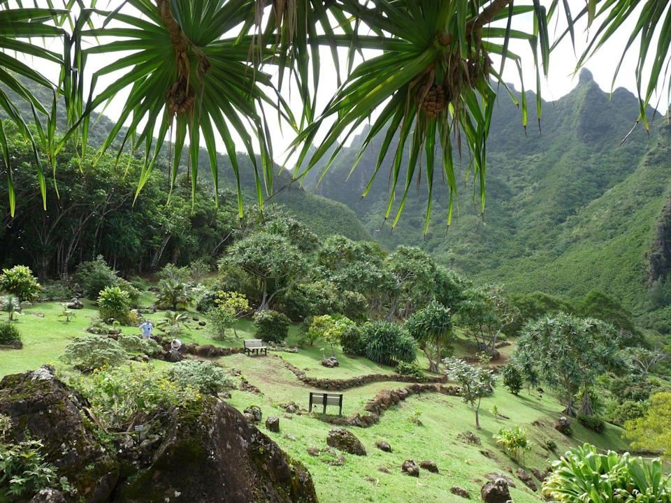 "<p>Nestled in a 2,000-foot-deep valley on the Garden Isle, the tropic forest and riparian habitat of <a href=""https://ntbg.org/gardens/limahuli"" rel=""nofollow noopener"" target=""_blank"" data-ylk=""slk:Limahui Garden & Preserve"" class=""link rapid-noclick-resp"">Limahui Garden & Preserve </a>spans over 1,000 acres. The American Horticultural Society named the tropical expanse the best natural botanical gardens in the United States with its conservation of rare Hawaiian flora and culturally significant plants such as native hibiscus and breadfruit. The spectacular taro terraces above the preservation's visitor center feature an ancient irrigation system that dates back centuries. </p>"