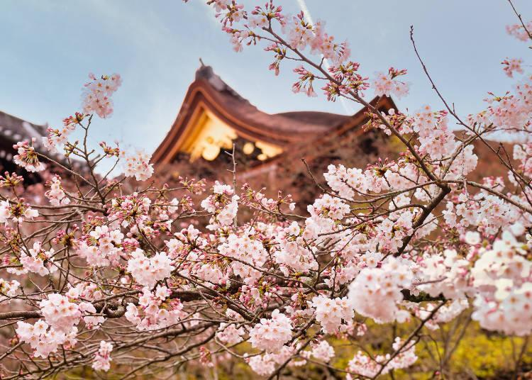 The ancient temple is a World Heritage Site symbolic of Japan