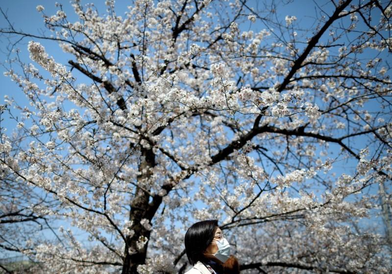 Woman wearing a protective face mask walks past under blooming cherry blossoms in Tokyo, Japan