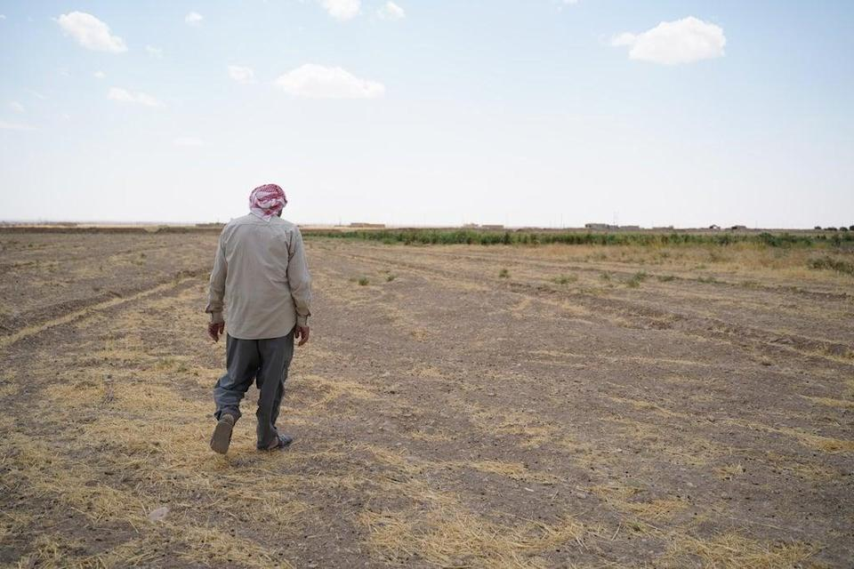 """Haji Hassa, a Yazidi farmer from Sinjar, said: """"The drought ruined our tomatoes, eggplants… you can see for yourself, it's all because of lack of rain."""" (Fared Baram / NRC)"""