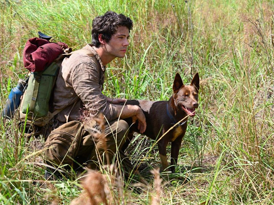 Joe finds himself a canine companion, played by very good boys Hero and Dodge in two of the finest animal performances of the yearNetflix