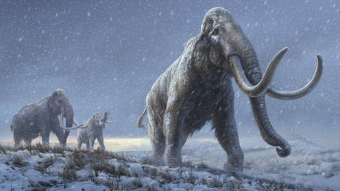 """<span class=""""caption"""">Current view of the steppe mammoth, an ancestor to the woolly mammoth.</span> <span class=""""attribution""""><span class=""""source"""">Beth Zaiken/Centre for Palaeogenetics</span>, <span class=""""license"""">Author provided</span></span>"""