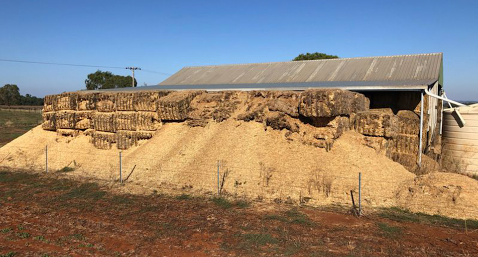 Haystacks which have been destroyed by mice in Dubbo.