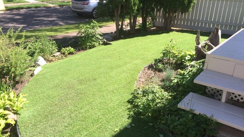 Artificial turf lawn growing more popular, Edmonton landscaper says