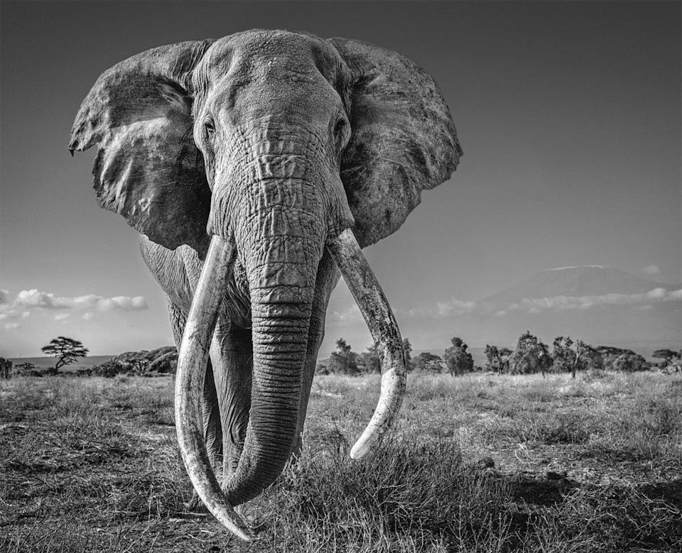 Globally renowned photographer David Yarrow took the image of Craig the elephant in Kenya during lockdownDavid Yarrow