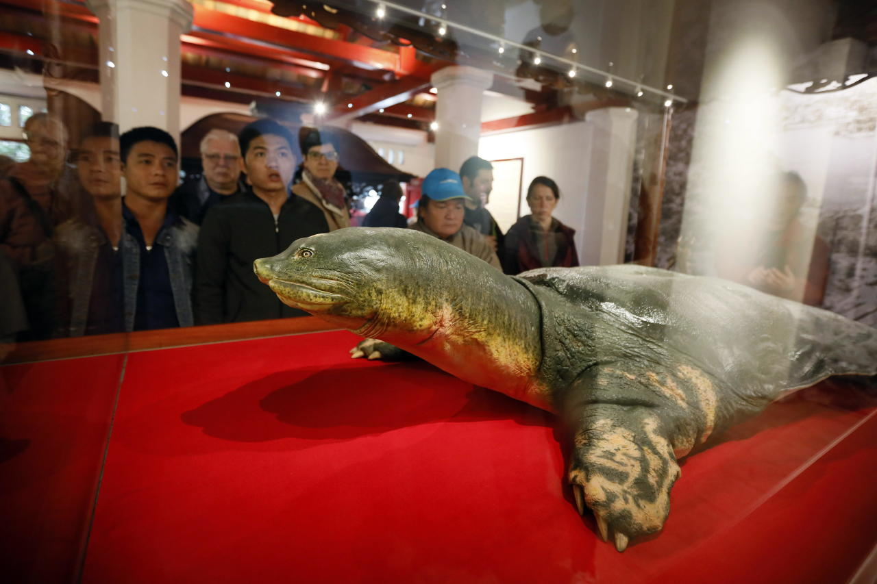 LIN01. Hanoi (Viet Nam), 18/03/2019.- Tourists look at a specimen of the last Hoan Kiem lake turtle inside Ngoc Son Temple, near the northern shore of Hoan Kiem Lake, in Hanoi, Vietnam, 18 March 2019. The last known turtle in Hoan Kiem Lake died in January 2016, and has been being preserved by Germany's asphalt method, which keeps the original color, patterns as well as dimension. The last Hoan Kiem lake turtle's specimen is 2.08 meters long and 1.1 meters wide. (Alemania) EFE/EPA/LUONG THAI LINH