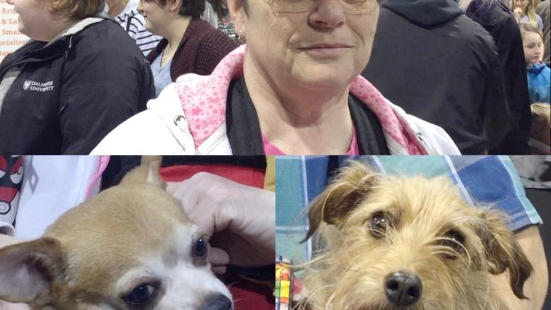 'Biggest year yet' for annual Doggie Expo held in Dartmouth