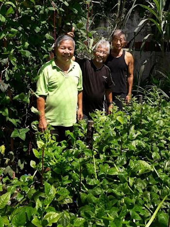 Harry Lee (in green) and his neighbours at their community garden at Mayfair Gardens