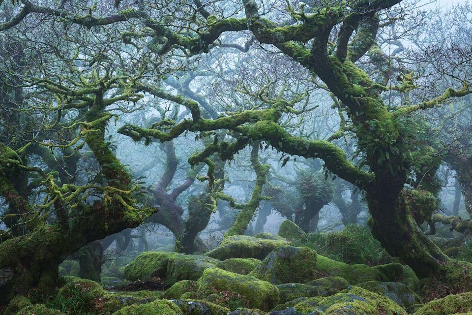 "<p>High above Dartmoor's West Dart River, gnarled and knotted branches reach out of the mist. Wistman's Wood might look like a landscape imagined by Tolkien, but the only dwarves in these parts are the stunted oaks that crouch above the forest floor. Unchanged for centuries, this Site of Special Scientific Interest is home to hundreds of species of lichen, a large population of adders and 46 types of liverwort and moss – some of which blanket the boulders that lie underfoot. A place of myth and mystery, local legend states that, come nightfall, hellhounds bound out from among the trees, seeking the souls of those that dare enter their domain. </p><p><a class=""link rapid-noclick-resp"" href=""https://www.visitdartmoor.co.uk/attraction/wistmans-wood"" rel=""nofollow noopener"" target=""_blank"" data-ylk=""slk:MORE INFO"">MORE INFO</a></p>"