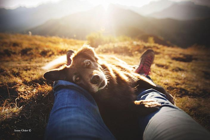 <p>Finn, a rescue dog cross breed, is pictured here resting on his owner under the warmth of the sun. </p>