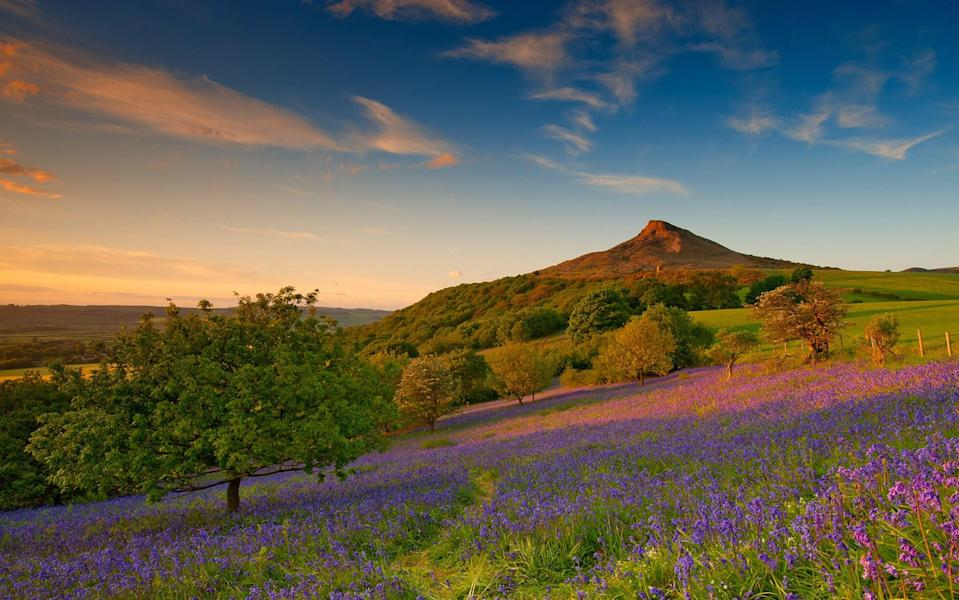 bluebells below roseberry topping - Getty